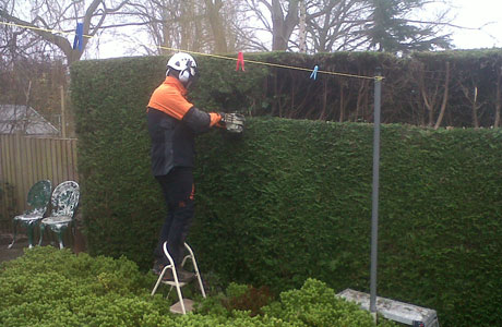 banner-hedge-trimming-1