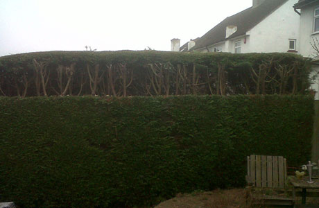 banner-hedge-trimming-2