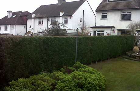 banner-hedge-trimming-3