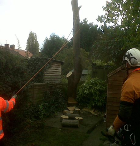 banner-tree-services-london-4