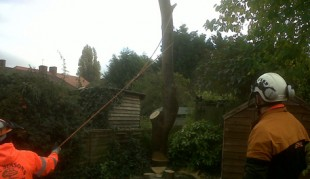 tree-surgeon-london-home-1